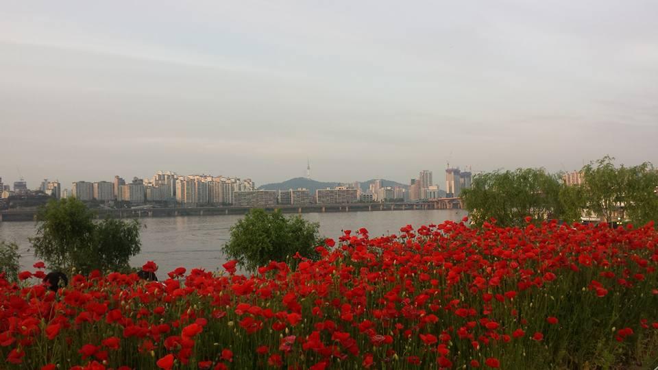 Yeouido Han River -puisto matkavinkki
